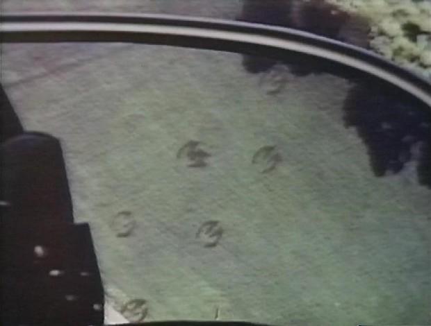 Giant Hoofprints