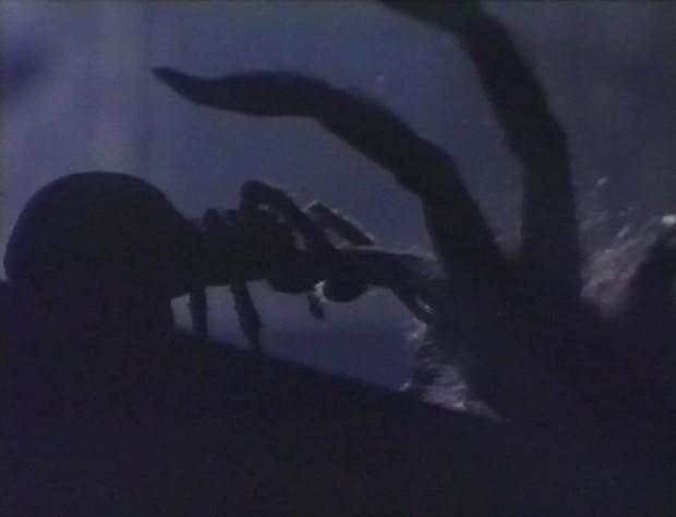 Spider Sex