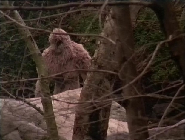 The Actual Bigfoot