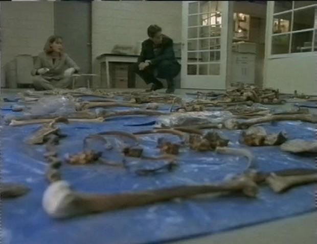 Lots of bones